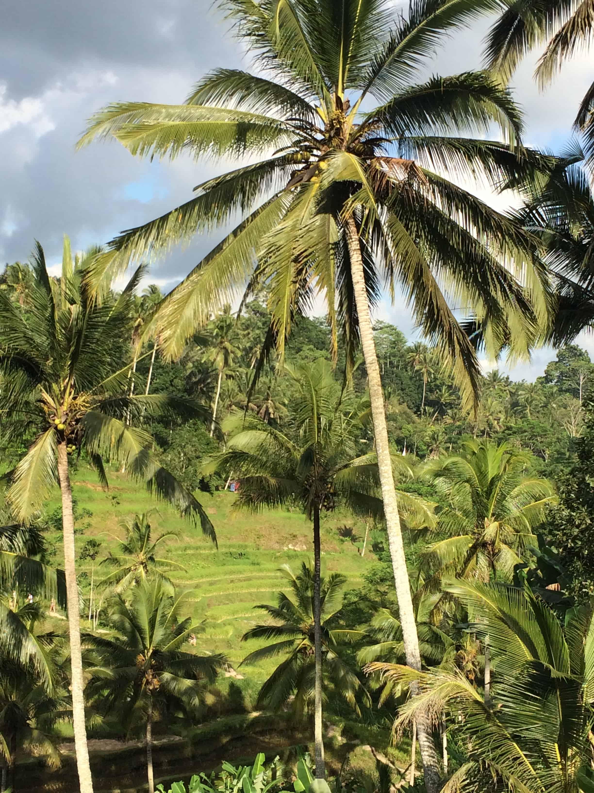 Rilassarsi ad Ubud